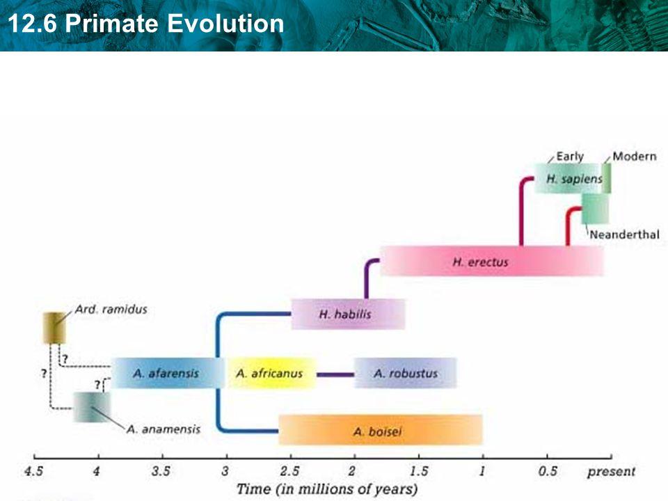 12.6 Primate Evolution