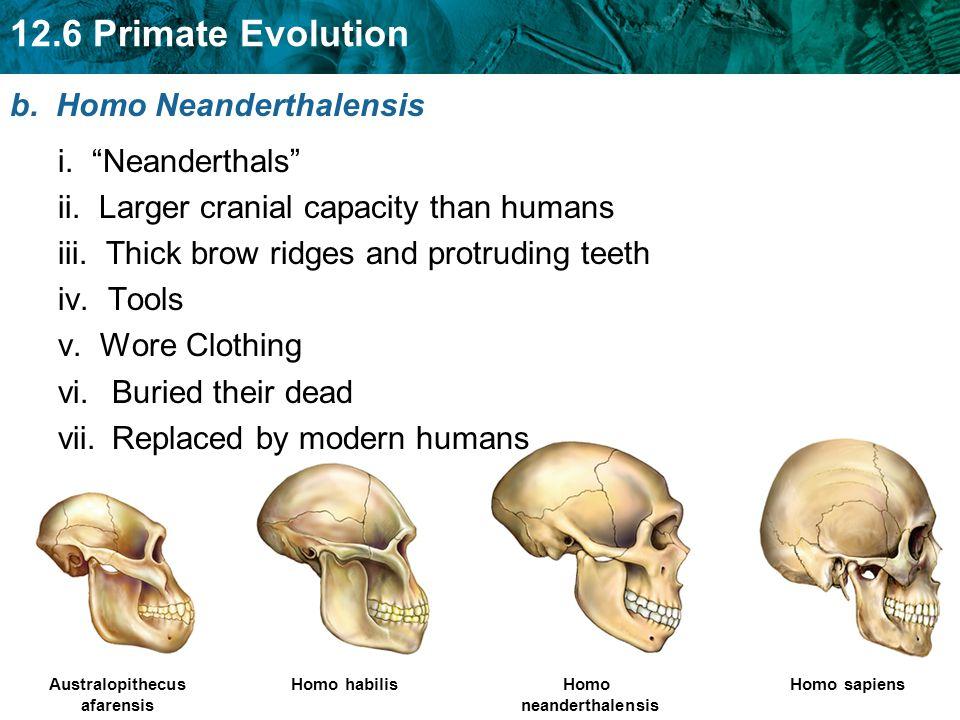 "Australopithecus afarensis Homo habilisHomo neanderthalensis Homo sapiens b. Homo Neanderthalensis i. ""Neanderthals"" ii. Larger cranial capacity than"