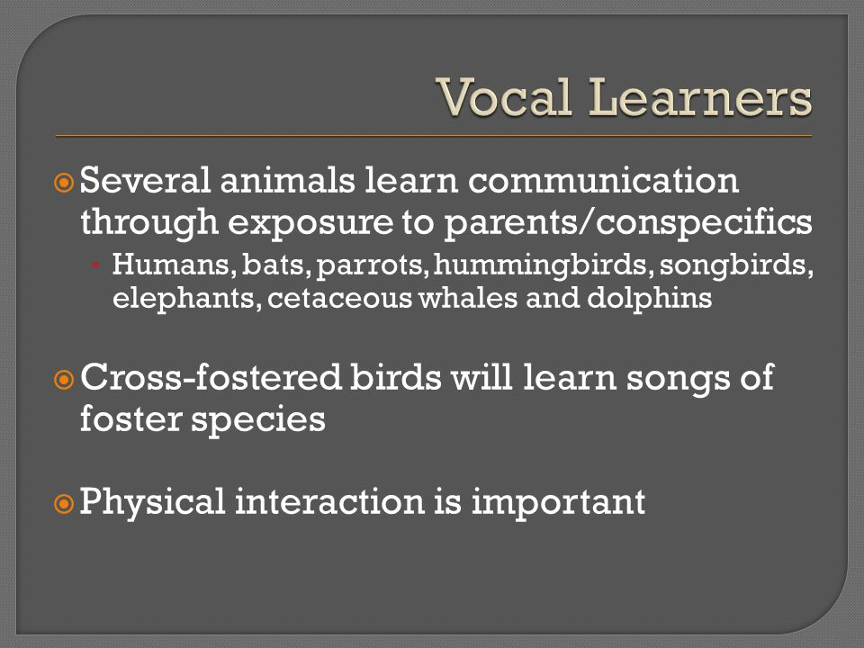  Several animals learn communication through exposure to parents/conspecifics Humans, bats, parrots, hummingbirds, songbirds, elephants, cetaceous whales and dolphins  Cross-fostered birds will learn songs of foster species  Physical interaction is important