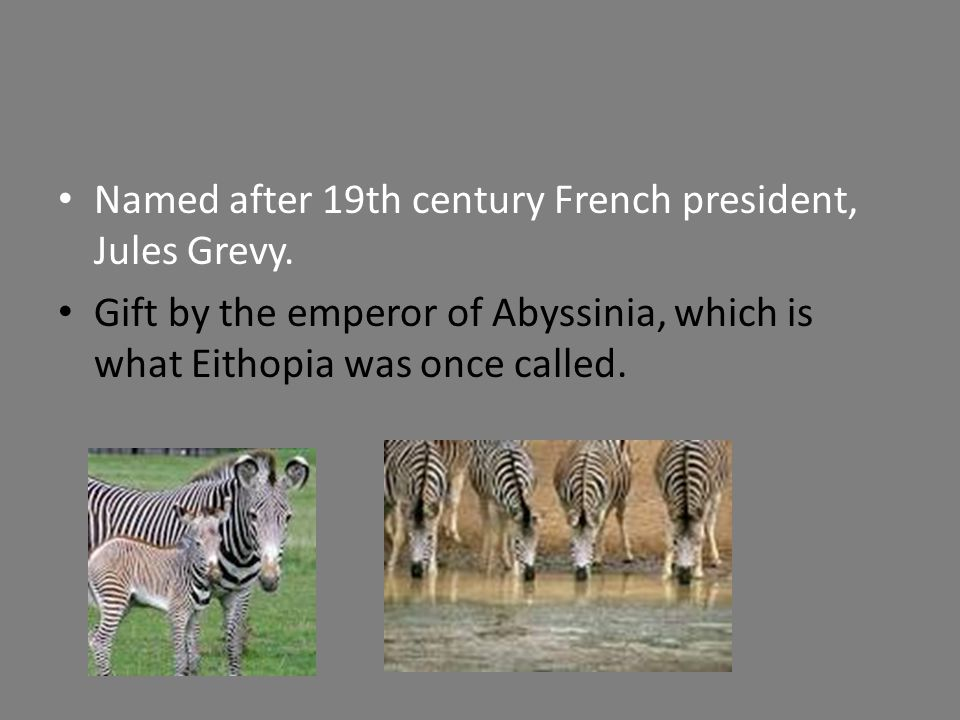 Named after 19th century French president, Jules Grevy. Gift by the emperor of Abyssinia, which is what Eithopia was once called.