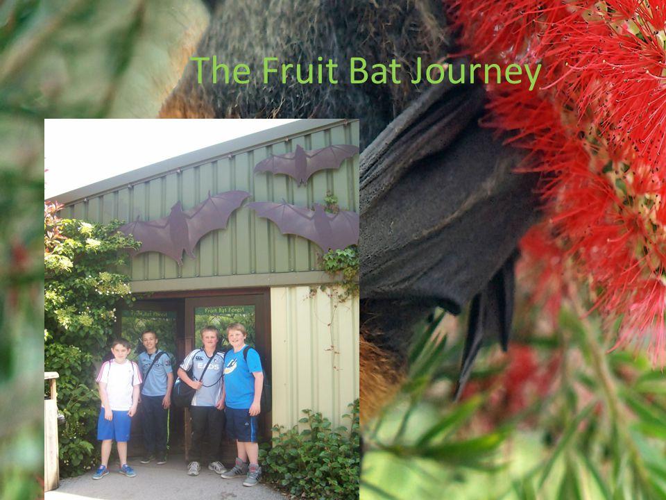 The Fruit Bat Journey