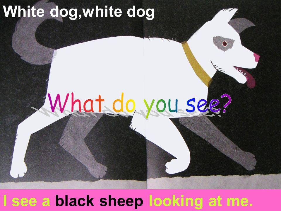 Black sheep,black sheep, I see a goldfish looking at me.