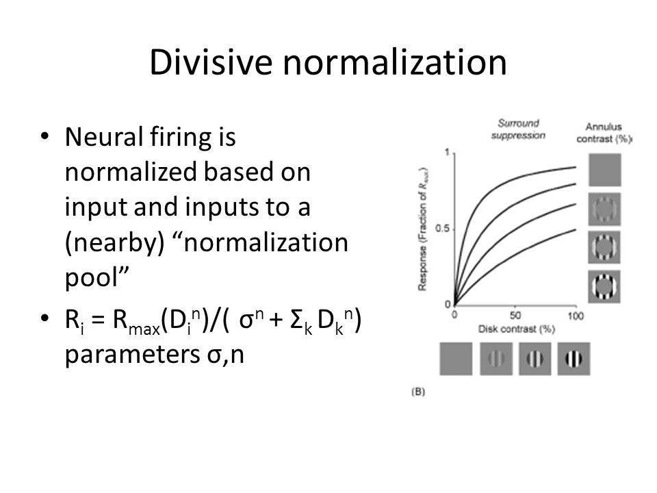 """Divisive normalization Neural firing is normalized based on input and inputs to a (nearby) """"normalization pool"""" R i = R max (D i n )/( σ n + Σ k D k n"""