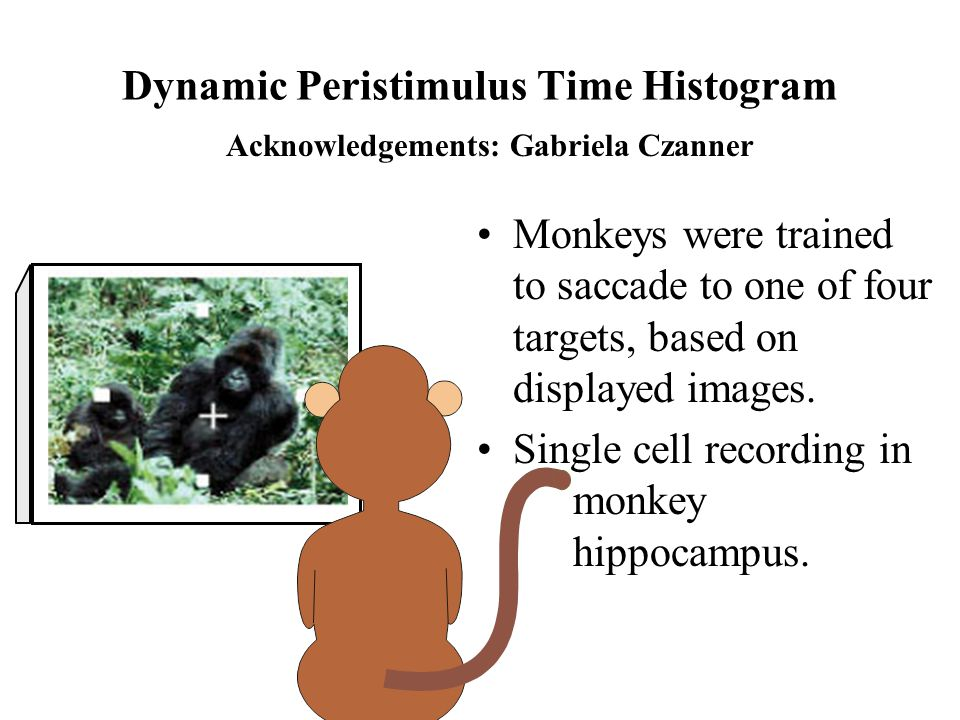 Monkeys were trained to saccade to one of four targets, based on displayed images.