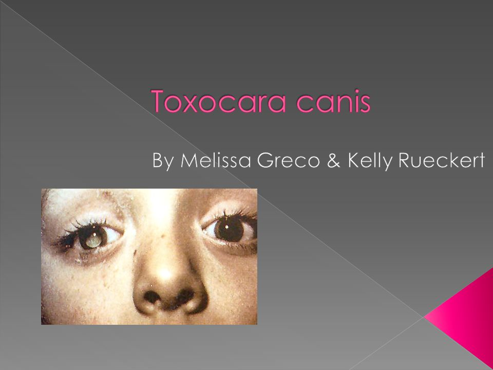 Order: Ascaridida › Family: Toxocarida › Genus: Toxocara › Species: T. canis  Geography: Worldwide