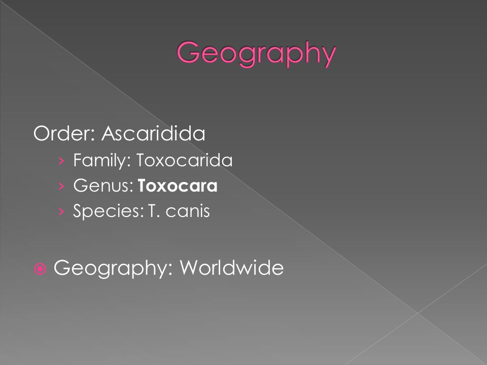 Order: Ascaridida › Family: Toxocarida › Genus: Toxocara › Species: T. canis  Geography: Worldwide