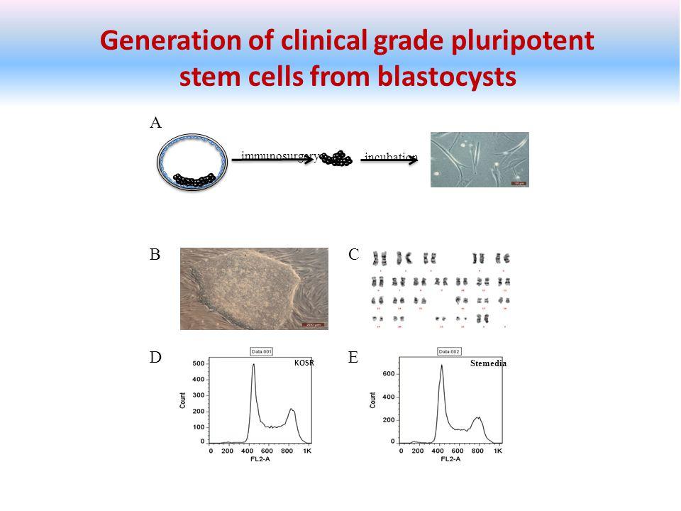 Generation of clinical grade pluripotent stem cells from blastocysts BC immunosurgery incubation A DE KOSR Stemedia