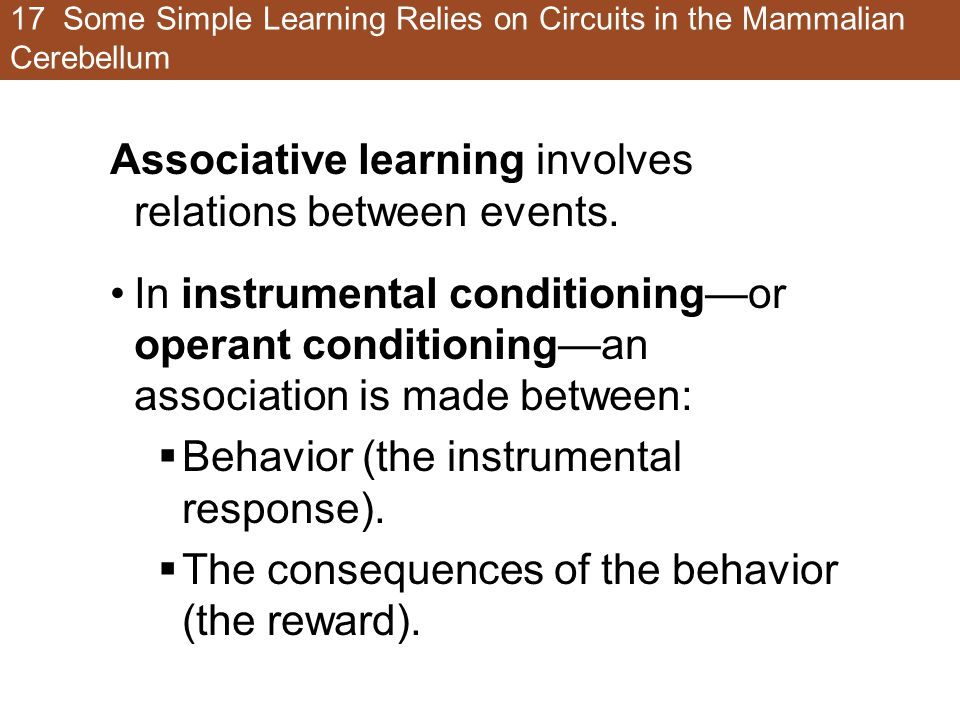 17 Some Simple Learning Relies on Circuits in the Mammalian Cerebellum Associative learning involves relations between events.