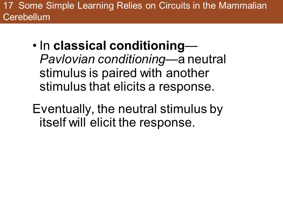 17 Some Simple Learning Relies on Circuits in the Mammalian Cerebellum In classical conditioning— Pavlovian conditioning—a neutral stimulus is paired with another stimulus that elicits a response.