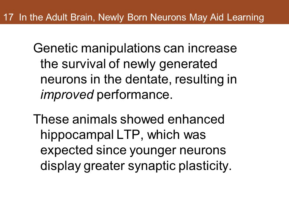 17 In the Adult Brain, Newly Born Neurons May Aid Learning Genetic manipulations can increase the survival of newly generated neurons in the dentate, resulting in improved performance.