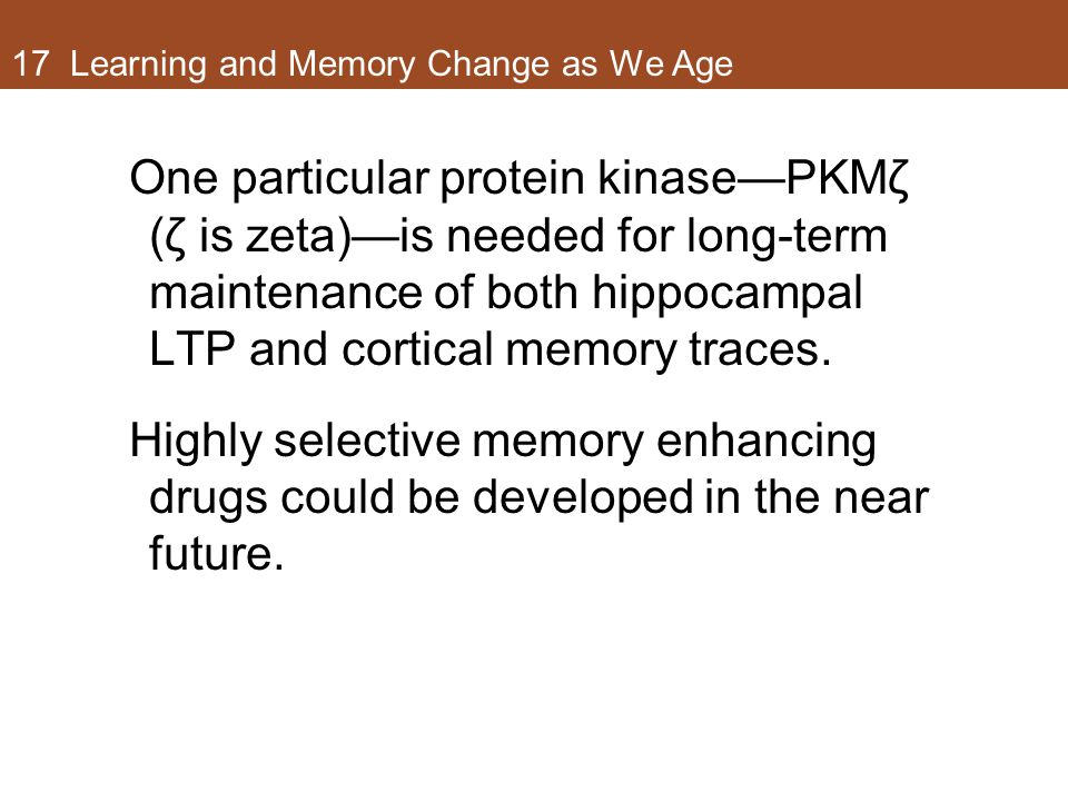 17 Learning and Memory Change as We Age One particular protein kinase—PKMζ (ζ is zeta)—is needed for long-term maintenance of both hippocampal LTP and