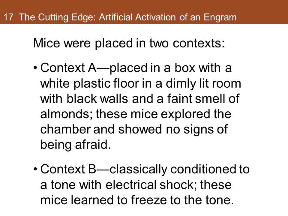 17 The Cutting Edge: Artificial Activation of an Engram Mice were placed in two contexts: Context A—placed in a box with a white plastic floor in a dimly lit room with black walls and a faint smell of almonds; these mice explored the chamber and showed no signs of being afraid.