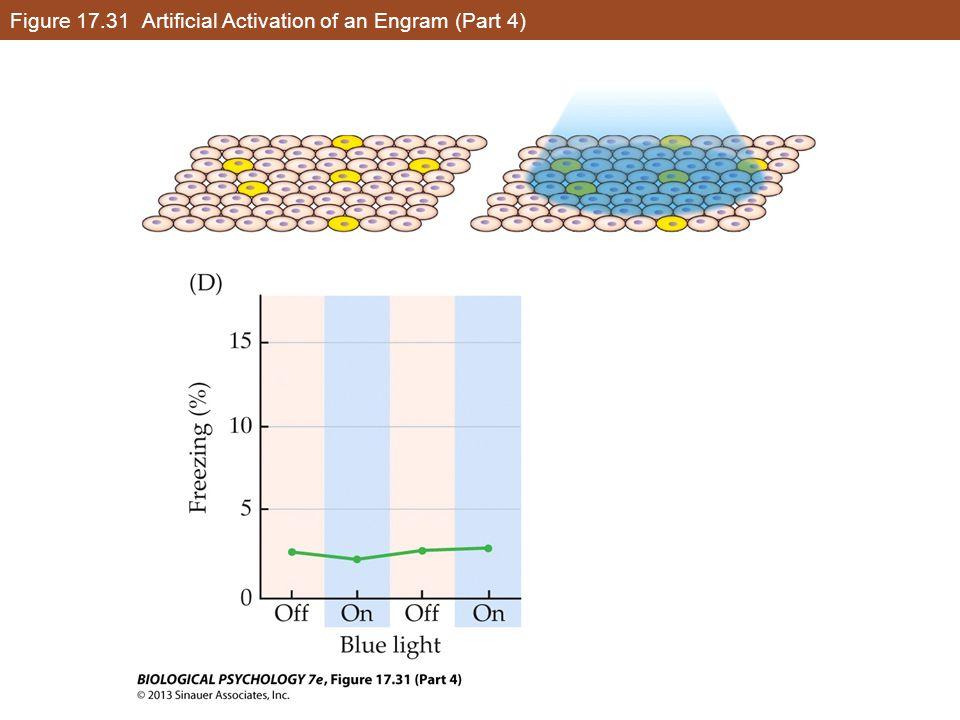 Figure 17.31 Artificial Activation of an Engram (Part 4)