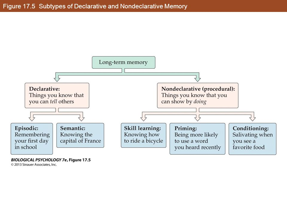 Figure 17.5 Subtypes of Declarative and Nondeclarative Memory