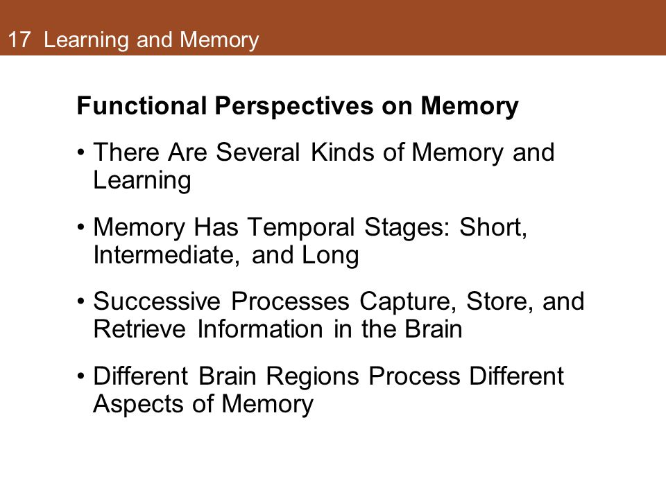 17 Learning and Memory Functional Perspectives on Memory There Are Several Kinds of Memory and Learning Memory Has Temporal Stages: Short, Intermediate, and Long Successive Processes Capture, Store, and Retrieve Information in the Brain Different Brain Regions Process Different Aspects of Memory