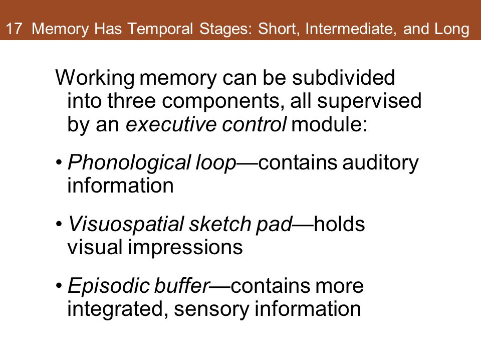 17 Memory Has Temporal Stages: Short, Intermediate, and Long Working memory can be subdivided into three components, all supervised by an executive control module: Phonological loop—contains auditory information Visuospatial sketch pad—holds visual impressions Episodic buffer—contains more integrated, sensory information
