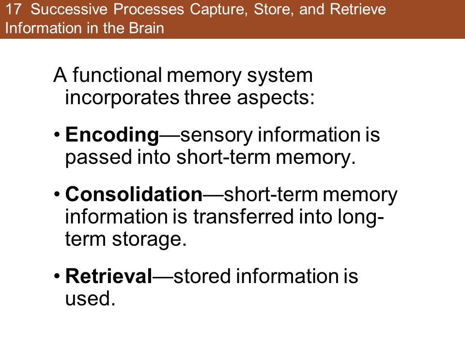 17 Successive Processes Capture, Store, and Retrieve Information in the Brain A functional memory system incorporates three aspects: Encoding—sensory information is passed into short-term memory.