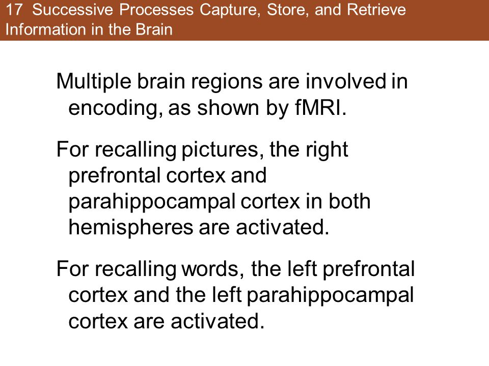 17 Successive Processes Capture, Store, and Retrieve Information in the Brain Multiple brain regions are involved in encoding, as shown by fMRI. For r
