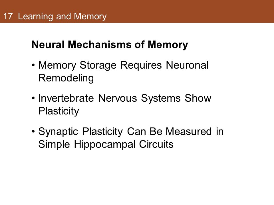 17 Learning and Memory Neural Mechanisms of Memory Memory Storage Requires Neuronal Remodeling Invertebrate Nervous Systems Show Plasticity Synaptic Plasticity Can Be Measured in Simple Hippocampal Circuits