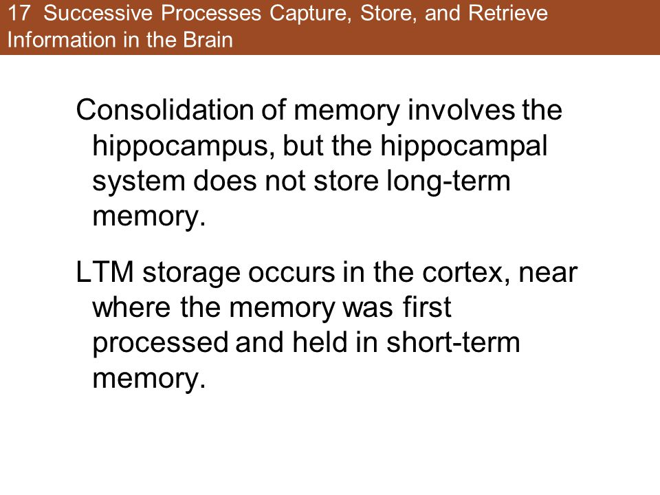 17 Successive Processes Capture, Store, and Retrieve Information in the Brain Consolidation of memory involves the hippocampus, but the hippocampal system does not store long-term memory.