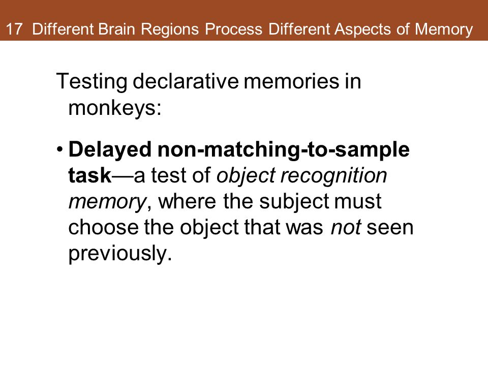 17 Different Brain Regions Process Different Aspects of Memory Testing declarative memories in monkeys: Delayed non-matching-to-sample task—a test of object recognition memory, where the subject must choose the object that was not seen previously.