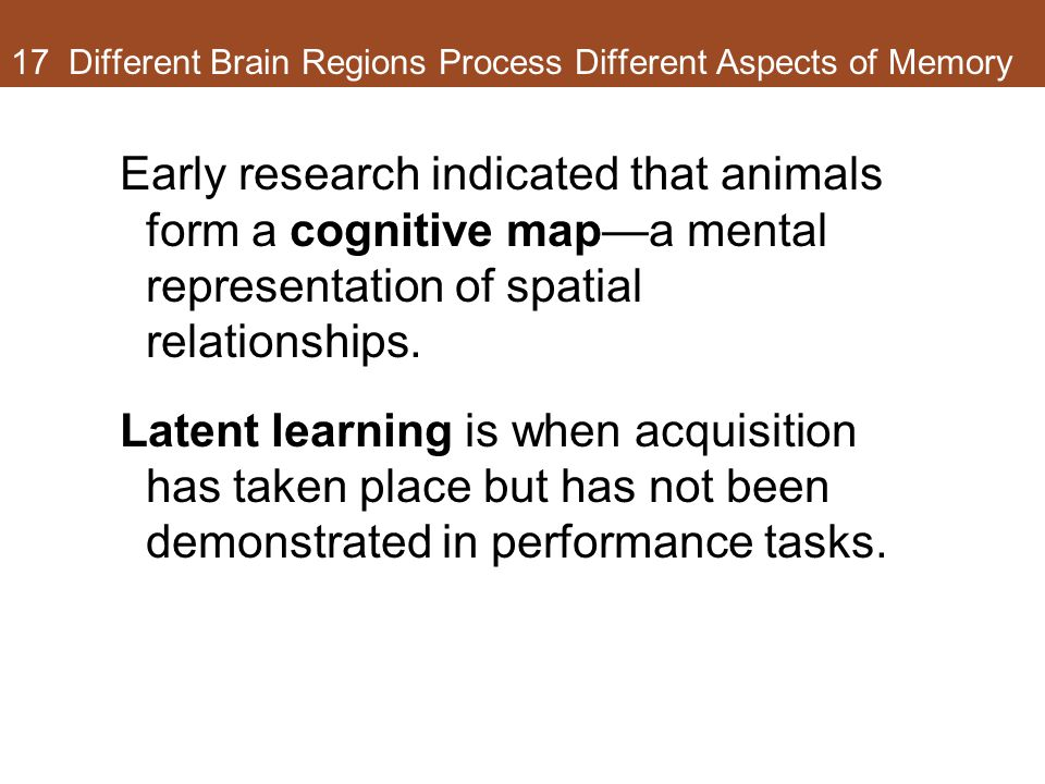 17 Different Brain Regions Process Different Aspects of Memory Early research indicated that animals form a cognitive map—a mental representation of spatial relationships.