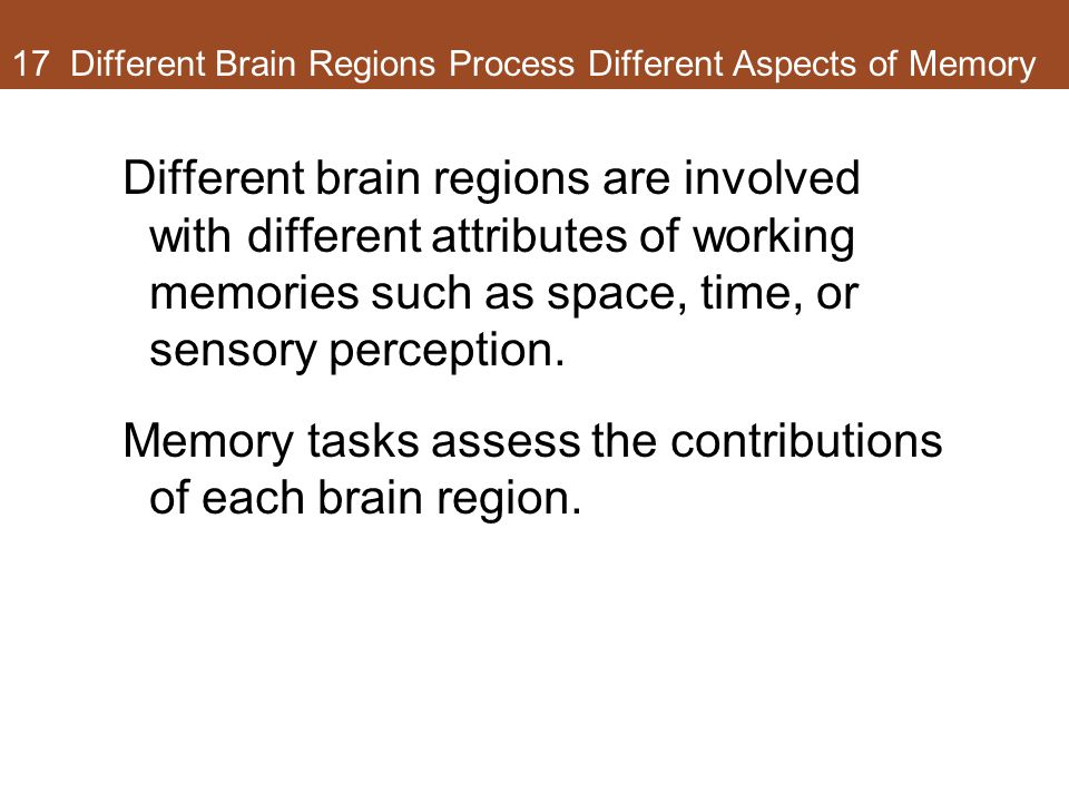 17 Different Brain Regions Process Different Aspects of Memory Different brain regions are involved with different attributes of working memories such