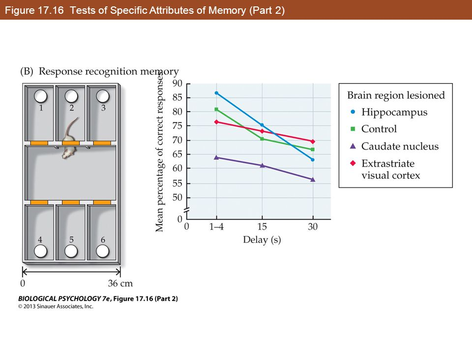 Figure 17.16 Tests of Specific Attributes of Memory (Part 2)