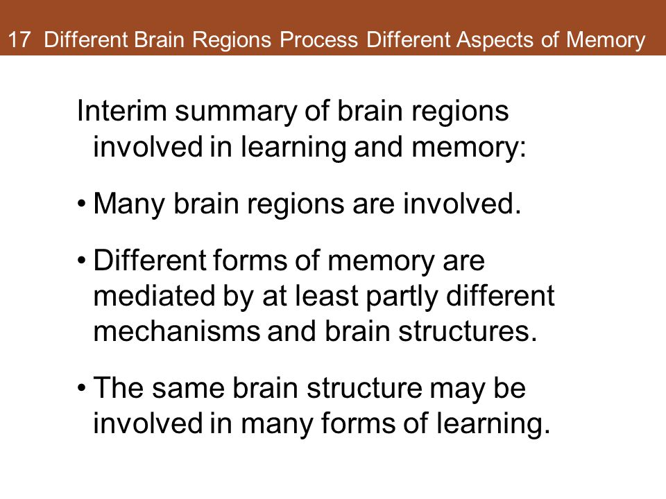17 Different Brain Regions Process Different Aspects of Memory Interim summary of brain regions involved in learning and memory: Many brain regions ar