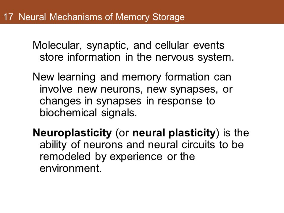 17 Neural Mechanisms of Memory Storage Molecular, synaptic, and cellular events store information in the nervous system.