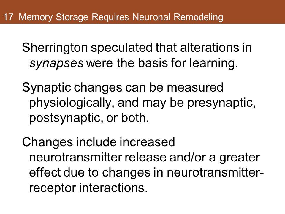 17 Memory Storage Requires Neuronal Remodeling Sherrington speculated that alterations in synapses were the basis for learning. Synaptic changes can b
