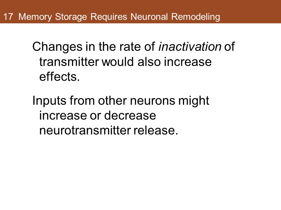 17 Memory Storage Requires Neuronal Remodeling Changes in the rate of inactivation of transmitter would also increase effects.