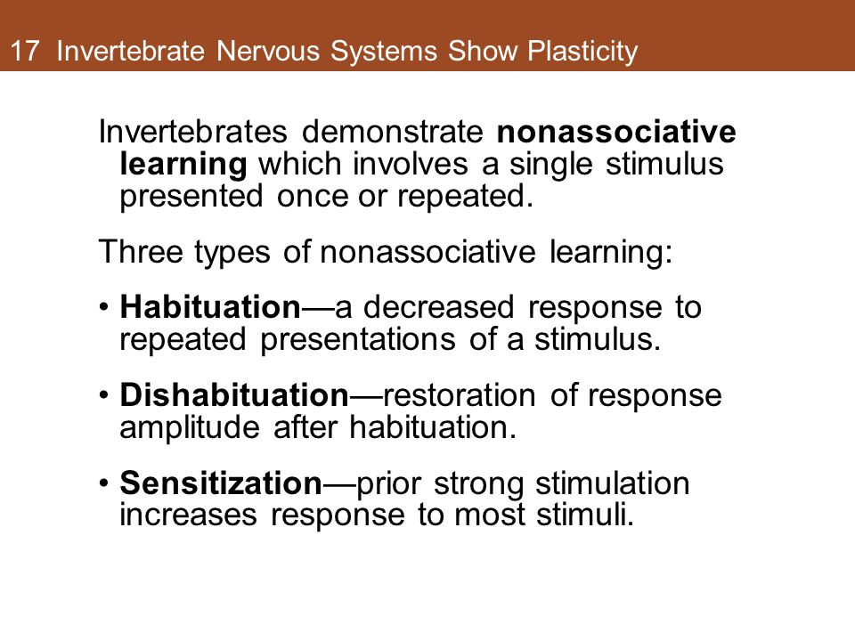 17 Invertebrate Nervous Systems Show Plasticity Invertebrates demonstrate nonassociative learning which involves a single stimulus presented once or r