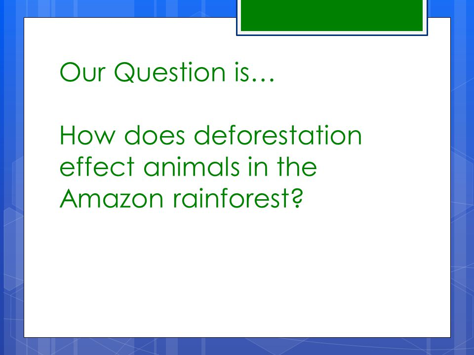 Our Conjecture is...Animals lose their homes and food sources.