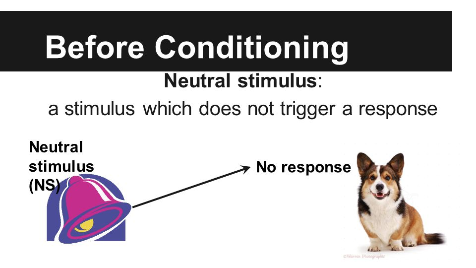 Before Conditioning Neutral stimulus: a stimulus which does not trigger a response Neutral stimulus (NS) No response
