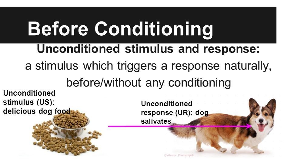 Before Conditioning Unconditioned stimulus and response: a stimulus which triggers a response naturally, before/without any conditioning Unconditioned stimulus (US): delicious dog food Unconditioned response (UR): dog salivates