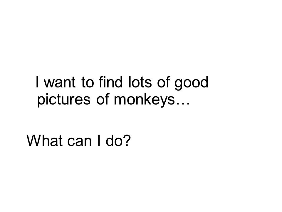 I want to find lots of good pictures of monkeys… What can I do?