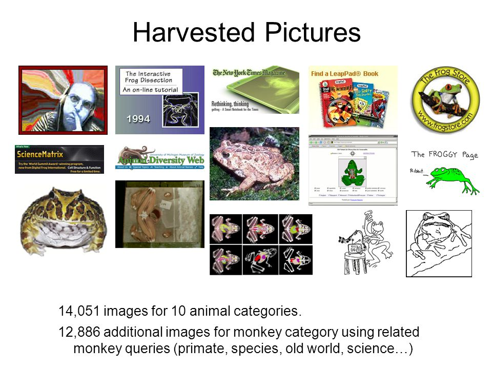 Harvested Pictures 14,051 images for 10 animal categories.