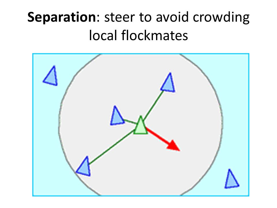 Separation: steer to avoid crowding local flockmates
