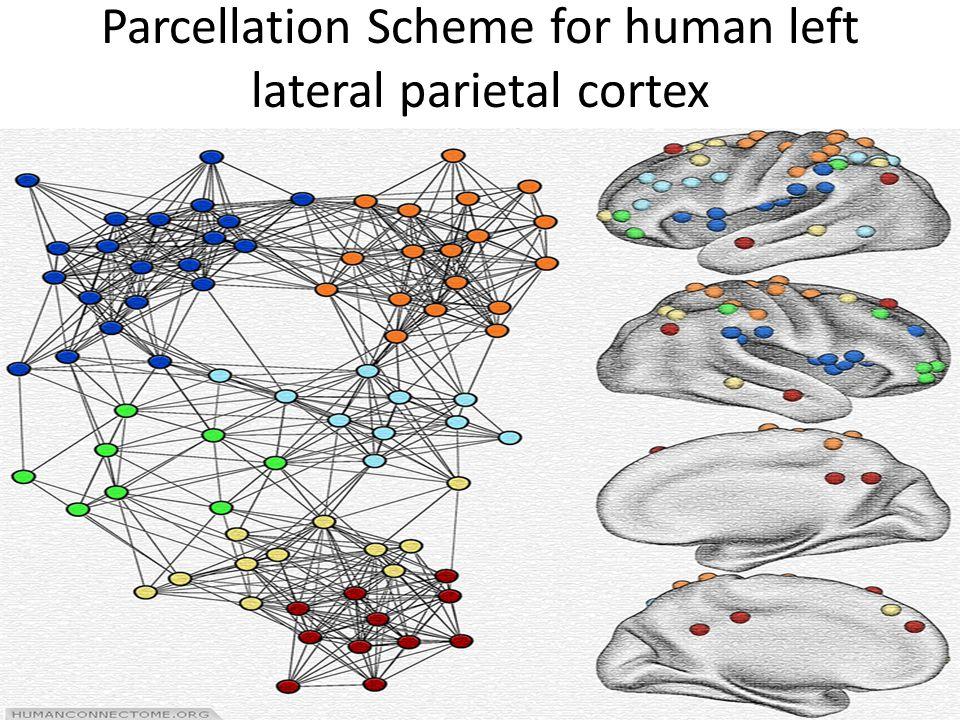 Parcellation Scheme for human left lateral parietal cortex