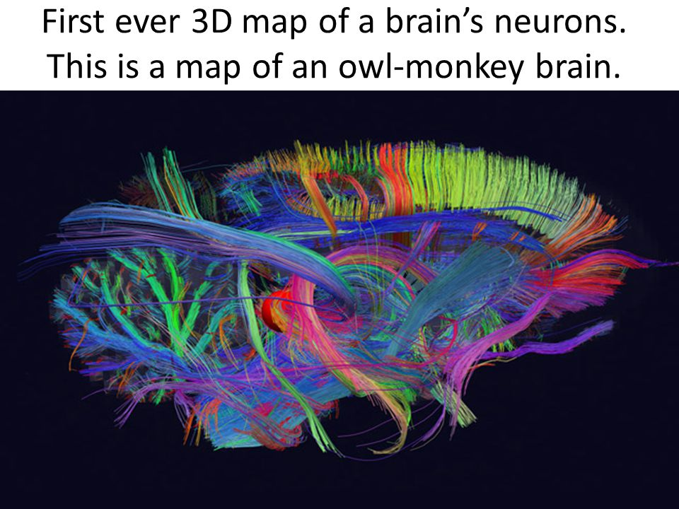First ever 3D map of a brain's neurons. This is a map of an owl-monkey brain.