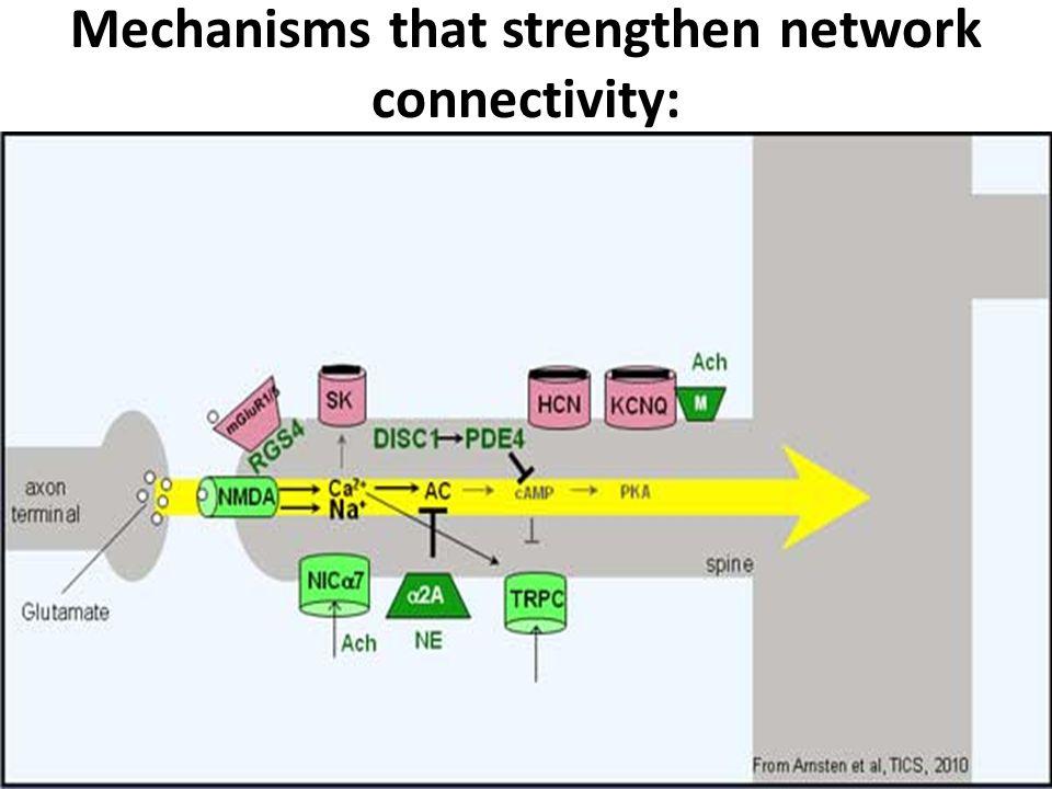 Mechanisms that strengthen network connectivity: