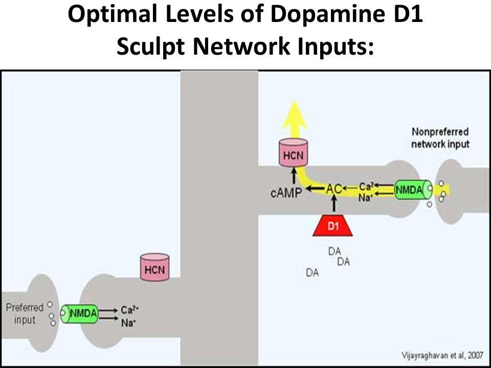Optimal Levels of Dopamine D1 Sculpt Network Inputs: