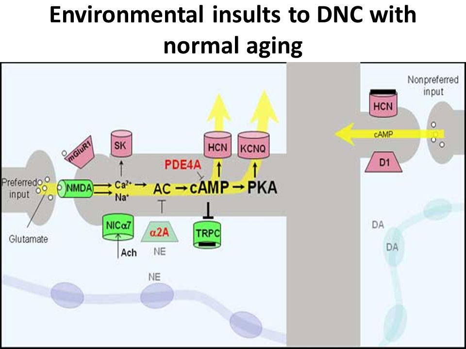 Environmental insults to DNC with normal aging