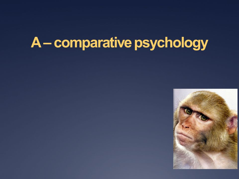 A – comparative psychology
