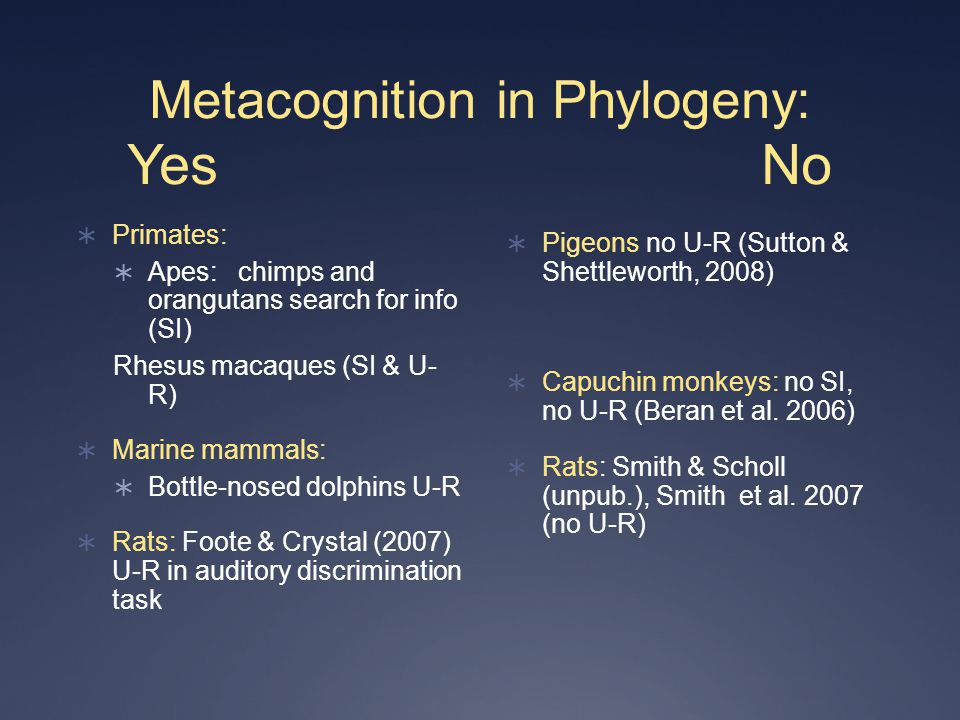 Metacognition in Phylogeny: Yes No  Primates:  Apes: chimps and orangutans search for info (SI) Rhesus macaques (SI & U- R)  Marine mammals:  Bottle-nosed dolphins U-R  Rats: Foote & Crystal (2007) U-R in auditory discrimination task  Pigeons no U-R (Sutton & Shettleworth, 2008)  Capuchin monkeys: no SI, no U-R (Beran et al.