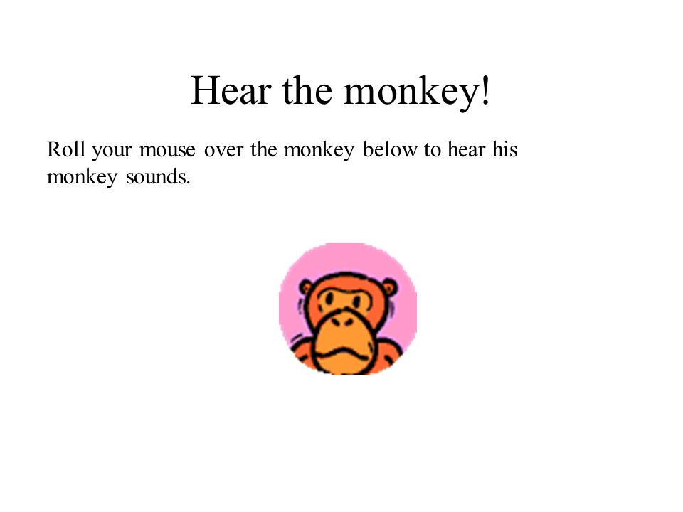 Hear the monkey! Roll your mouse over the monkey below to hear his monkey sounds.