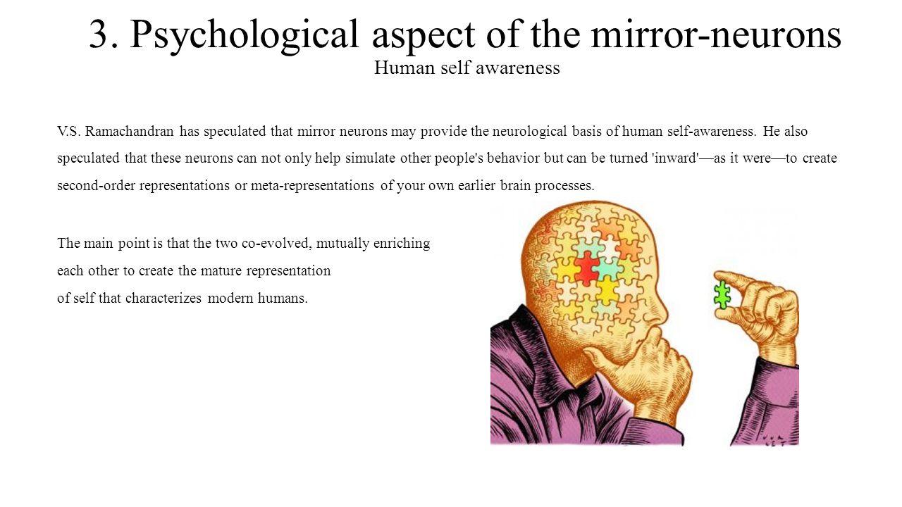 3. Psychological aspect of the mirror-neurons Human self awareness V.S. Ramachandran has speculated that mirror neurons may provide the neurological b