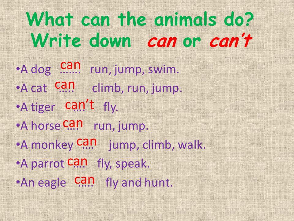 What can the animals do? Write down can or can't A dog ……. run, jump, swim. A cat ….. climb, run, jump. A tiger …. fly. A horse …. run, jump. A monkey