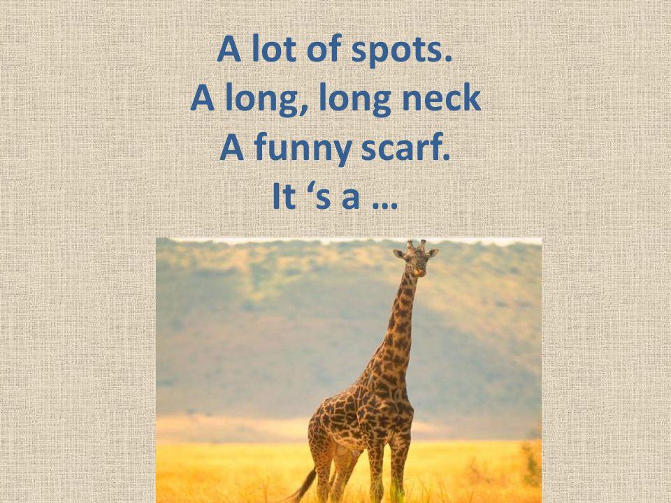 A lot of spots. A long, long neck A funny scarf. It 's a …